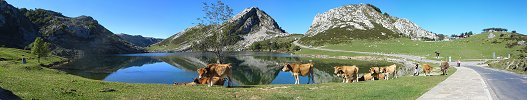 Click here to download wp_asturianvalleycattle.zip