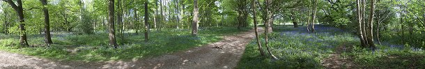 Click here to download wp_blicklingbluebells.zip