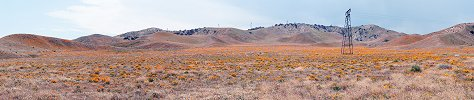 Click here to download wp_californiapoppies.zip