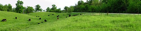 Click here to download wp_lakecitycattlegrazing.zip