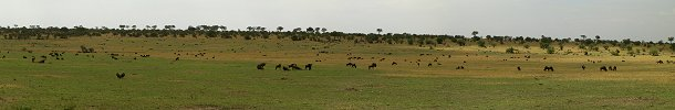 Click here to download wp_wildebeestsgrazing.zip