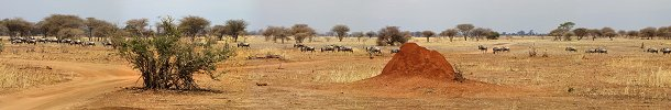 Click here to download wp_wildebeestsmigrationtarangire.zip